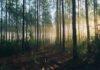 zmiany w prawie decyzje środowiskowe