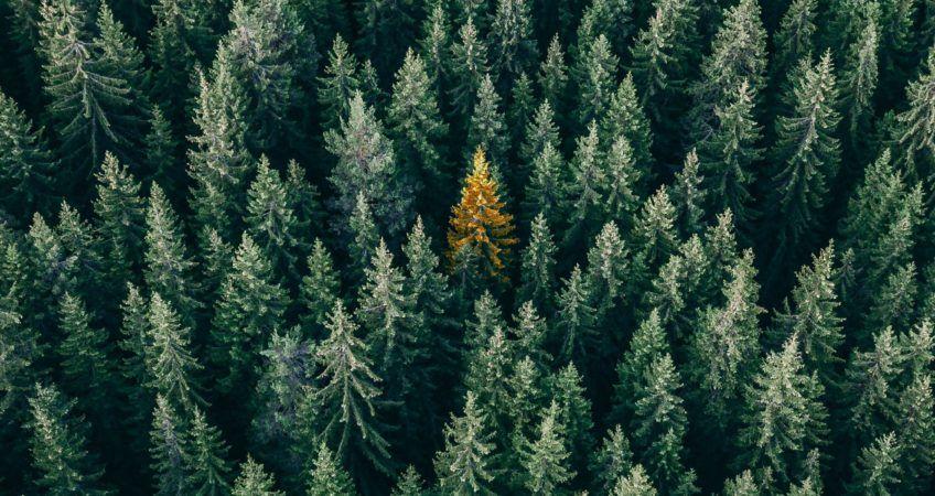 kwestie środowiskowe w firmie